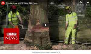 Tree clearance for 5G