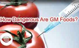 How Dangerous Are GM Foods?